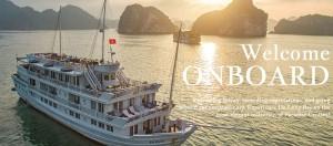 ao-thun-dong-phuc-paradise-cruises-kim-vang
